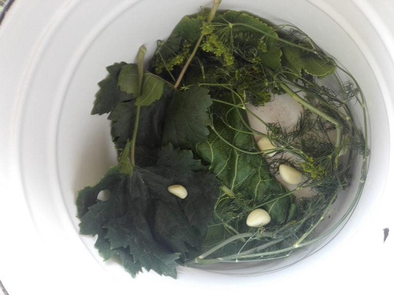 zelenye-pomidory (3)