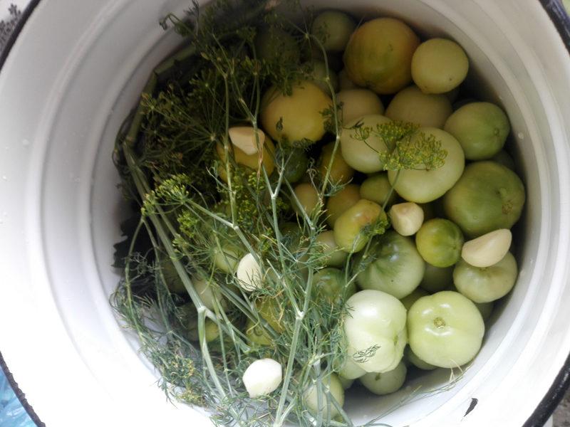 zelenye-pomidory (4)