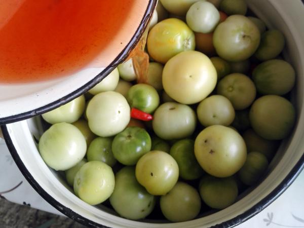 zelenye-pomidory (5)