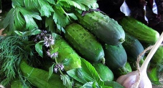 ingredienty-dlya-zakvashivaniya